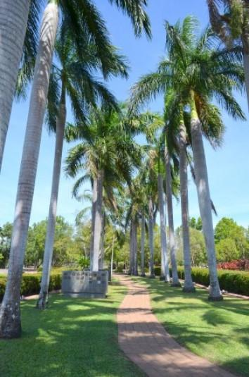 Thorak Regional Cemetry Pathway with Palm Trees